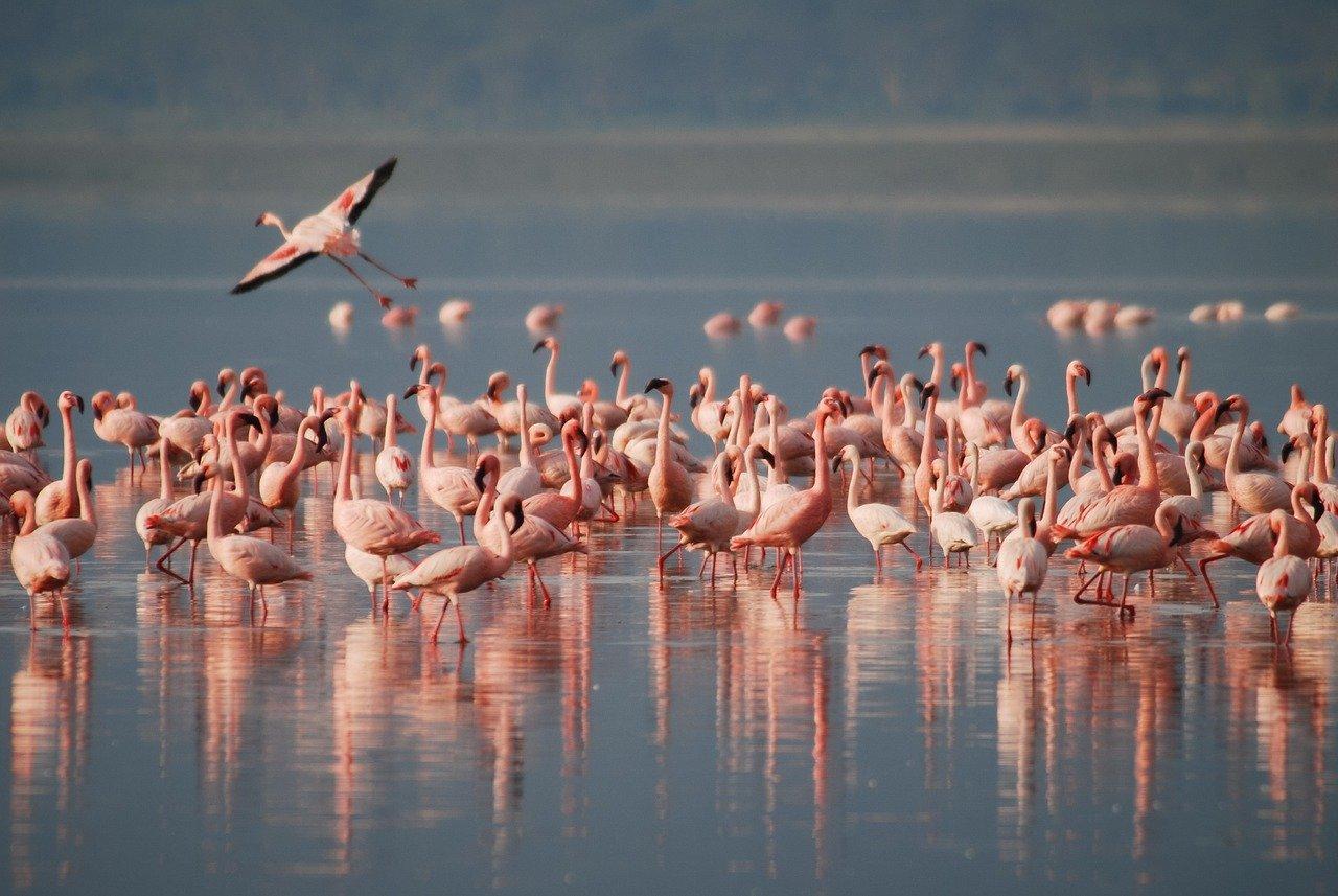 flamingos-1099071_1280.jpg